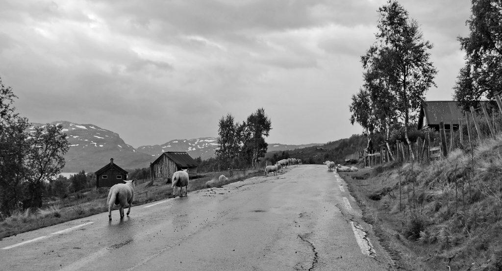 Čiernobiela fotografia 35a