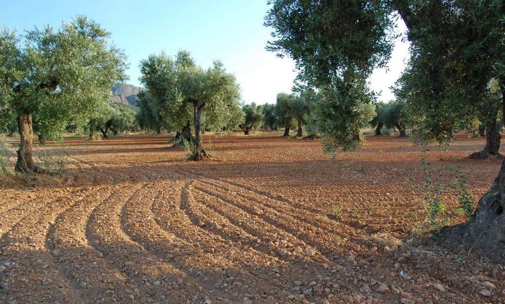 Andaluzia (12)
