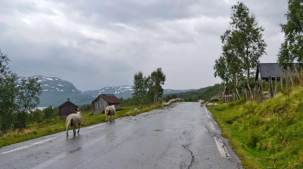 Norsko (46)