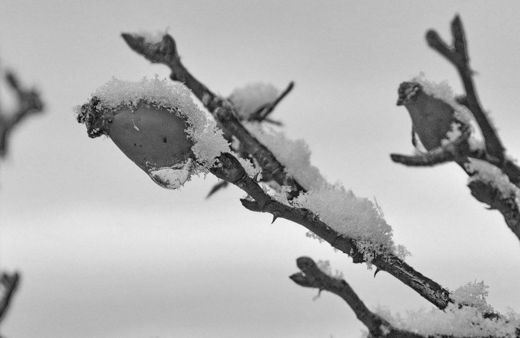Čiernobiela zima (13)
