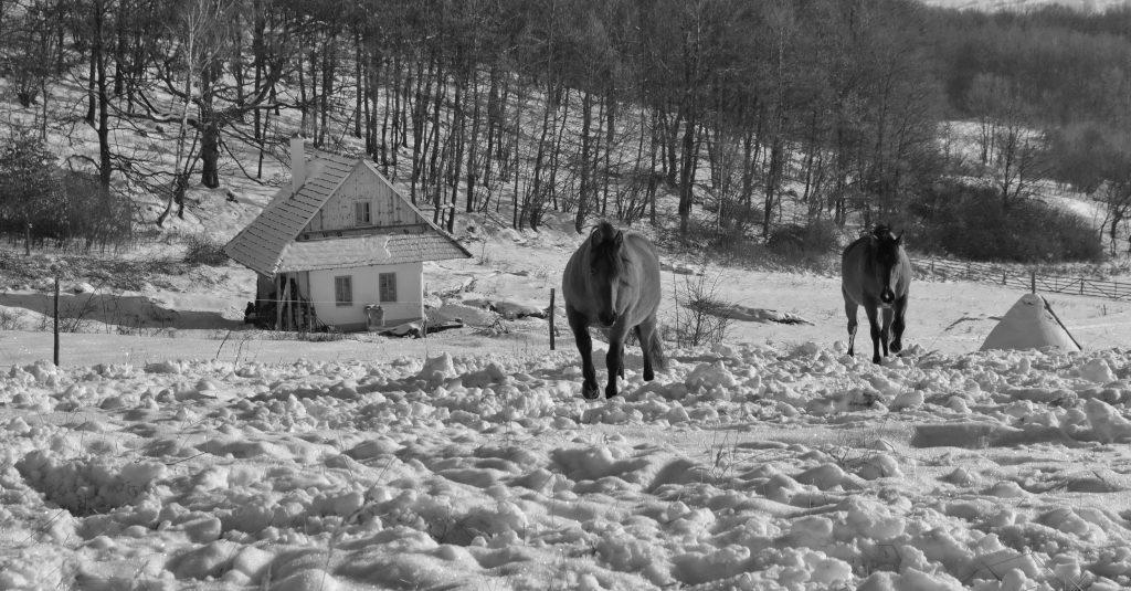 Čiernobiela zima (34)