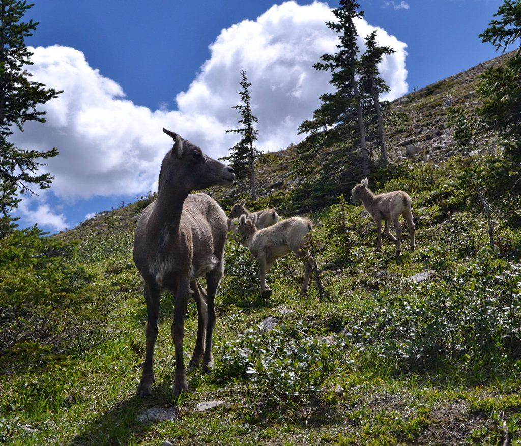 Národný park Jasper 11