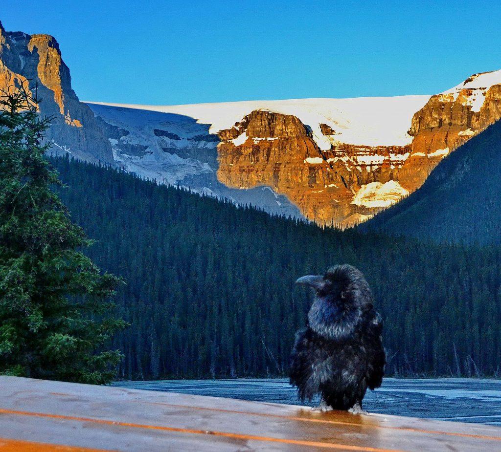 Národný park Jasper 31