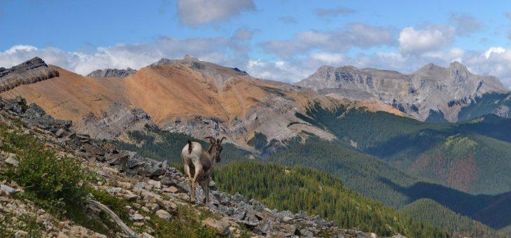 Návrat z Aljašky – National Park Jasper