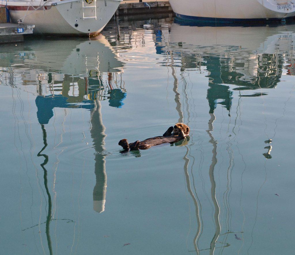 Neskoro popoludní opäť v prístave. Vydra už spí, tma príde až oveľa neskôr, aj to nie úplná