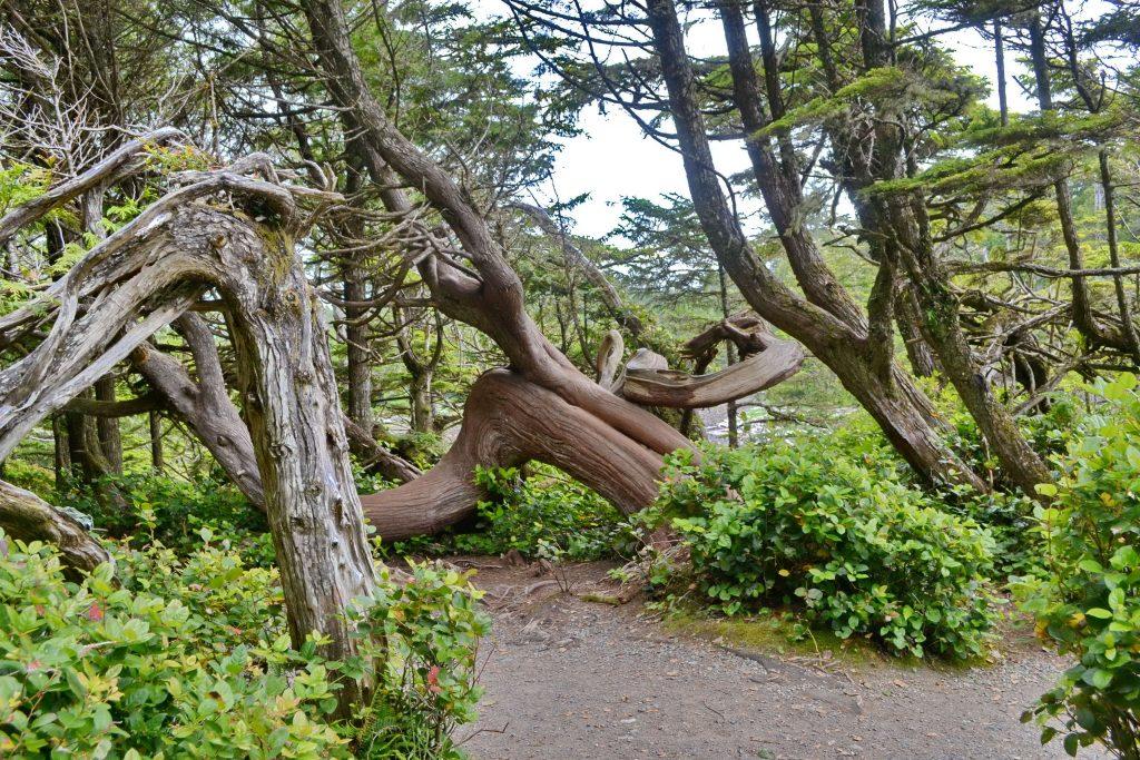 Stromy zocelené chladom a víchricami