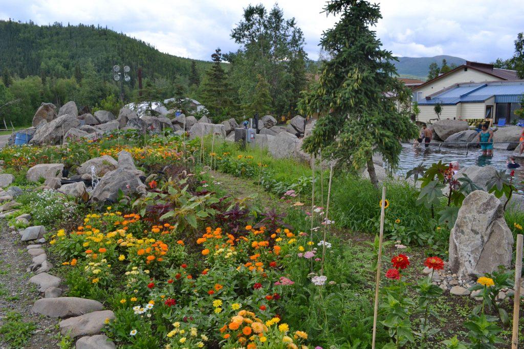 Vďaka teplým prameňom pestujú na Aljaške kvety aj zeleninu