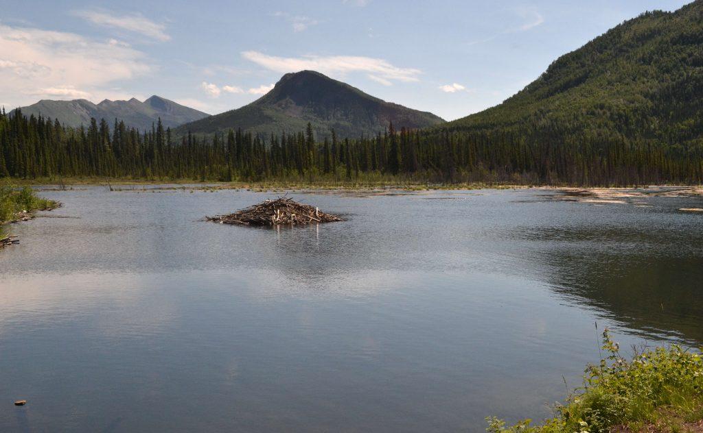 Bobrí domček na jazere